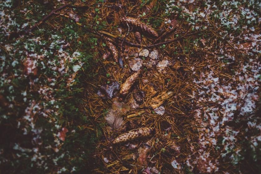 vinter_gullringen-18