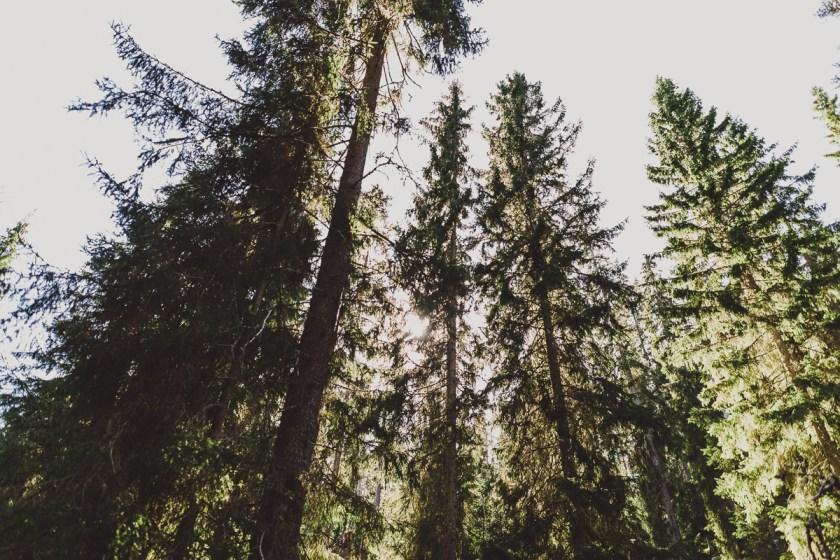 antligenvilse_norra_kvill-20