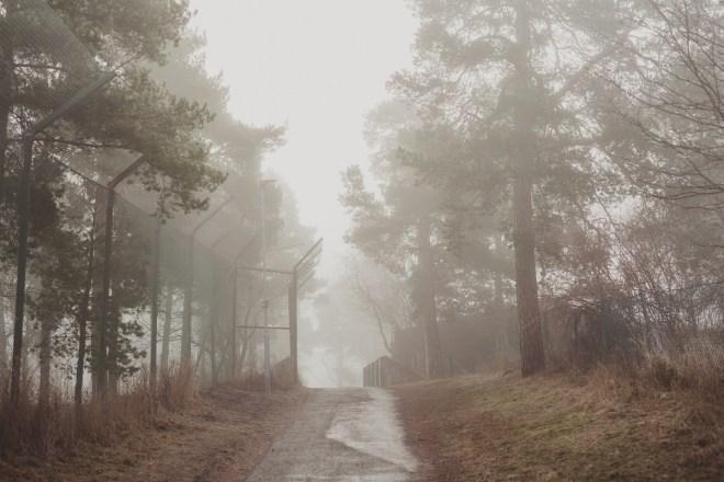 stockholm_antligenvilse-88
