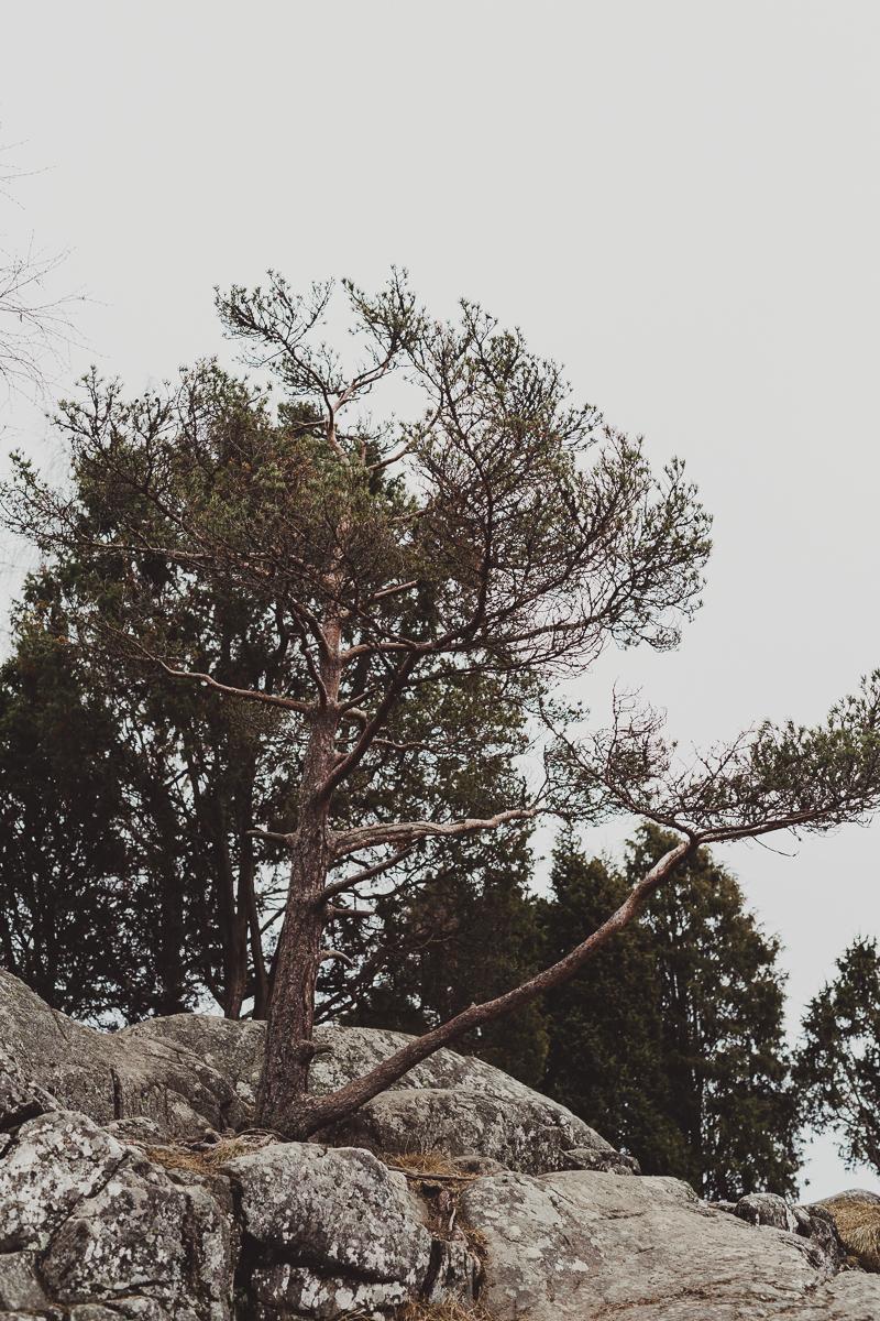 stockholm_antligenvilse_tyresta-2