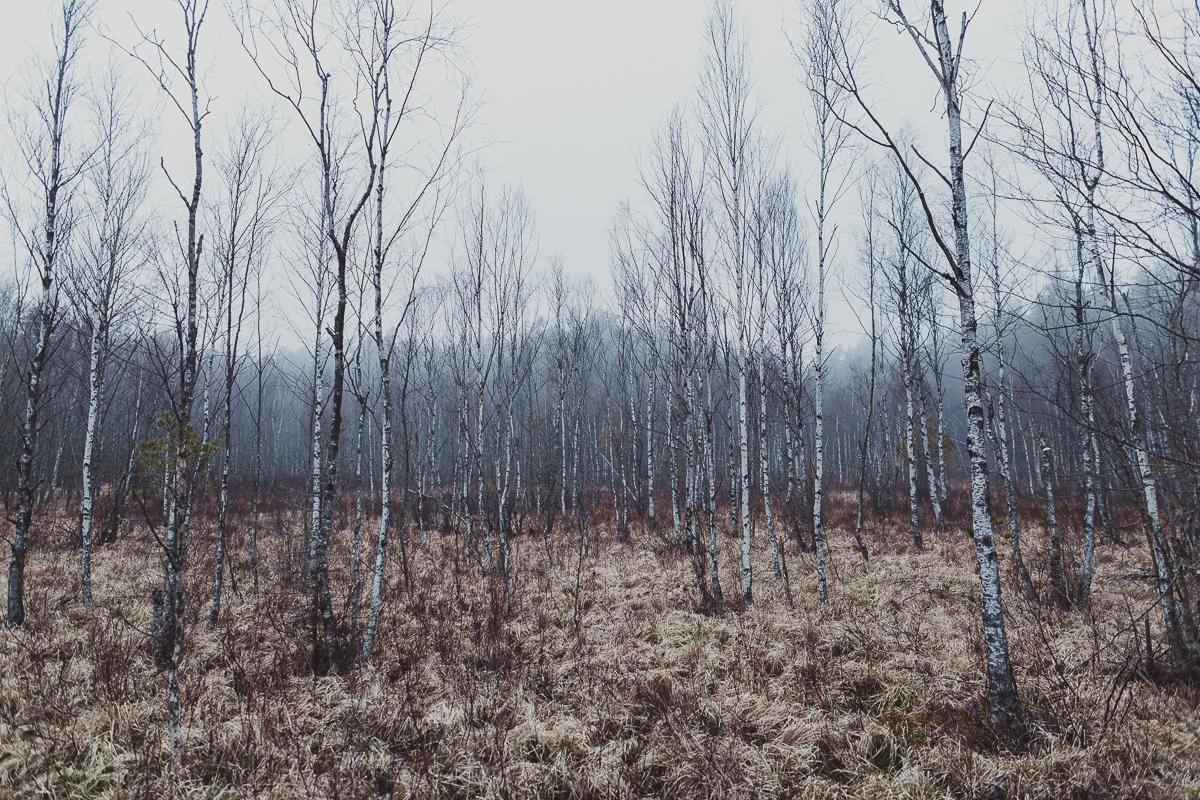 stockholm_antligenvilse_tyresta-49