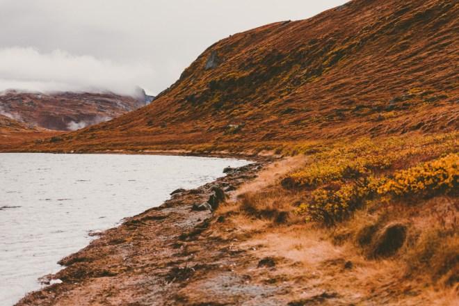 arktisk_oken_gronland-28