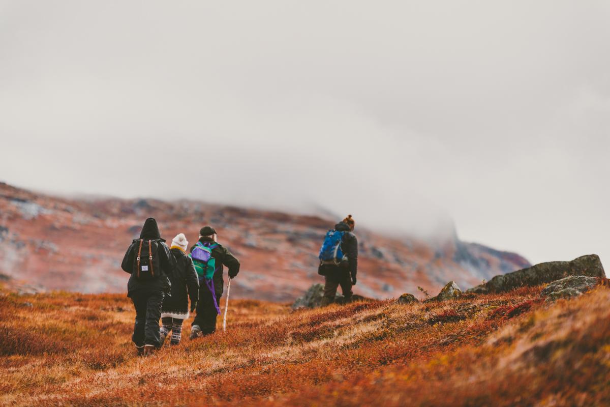 arktisk_oken_gronland-33