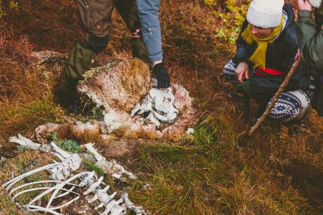 arktisk_oken_gronland-42