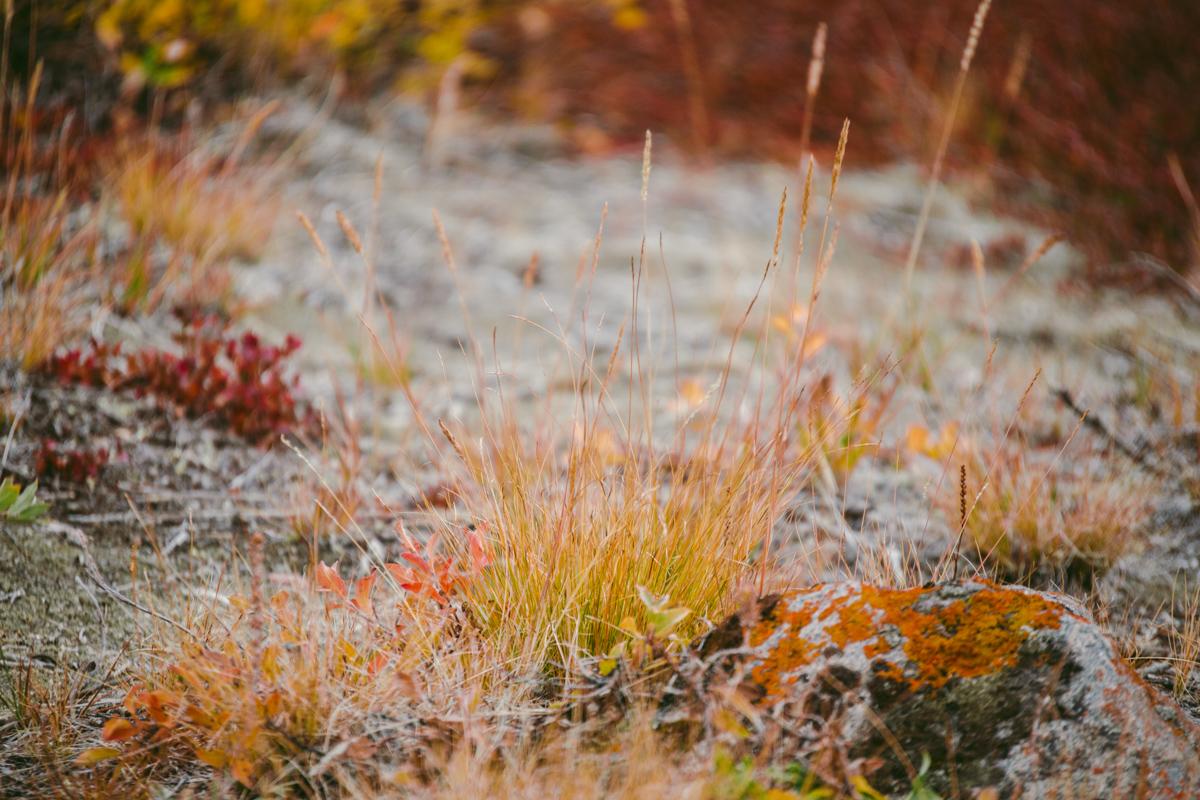 arktisk_oken_gronland-60