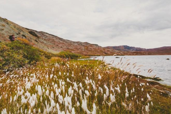 arktisk_oken_gronland-92