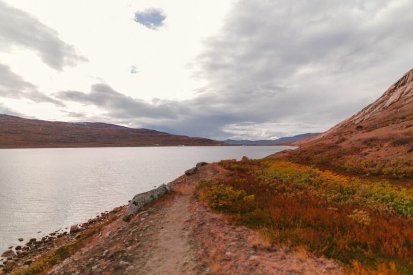 arktisk_oken_gronland-94