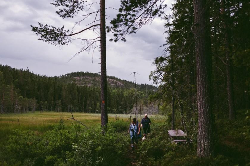 skuleskogen höga kusten vandra