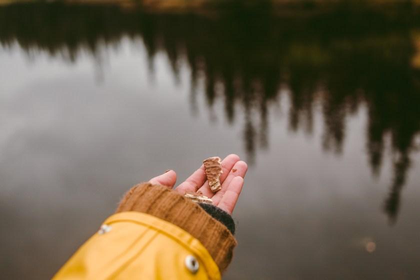 Mata en fågel ur handen – Lavskrikan
