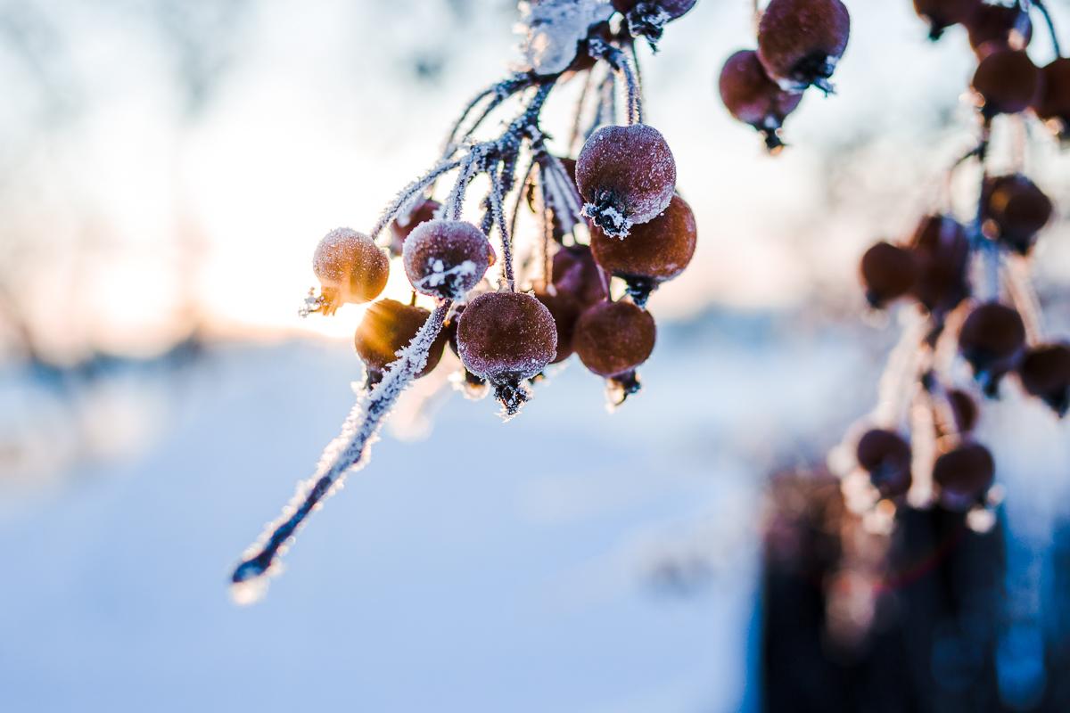 umeå vinter
