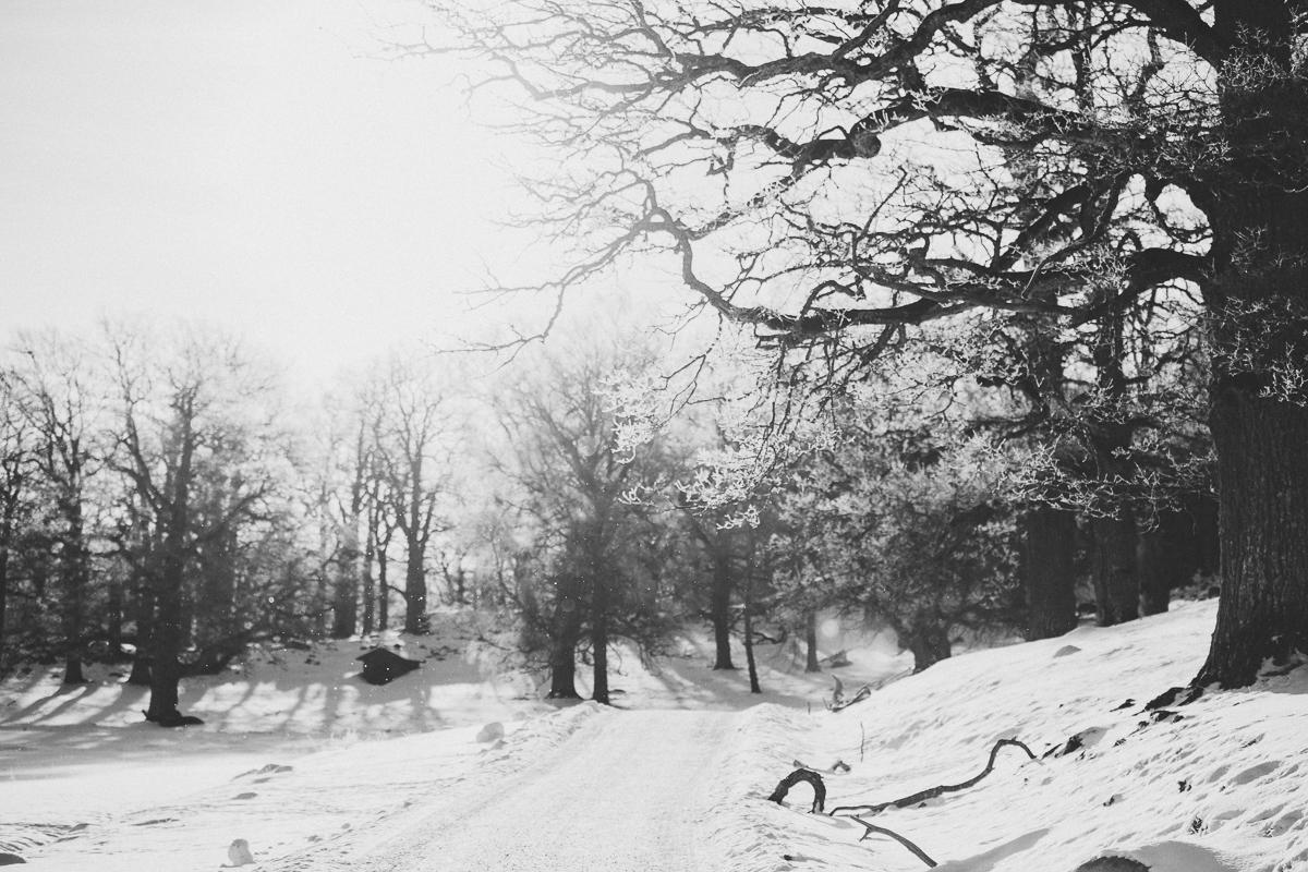 gripsholm hjorthage naturreservat