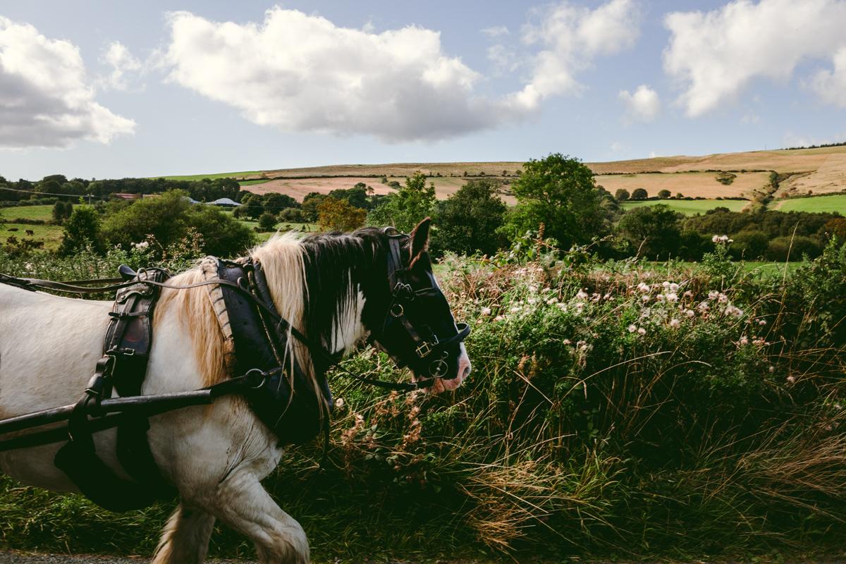 clissman horse caravans