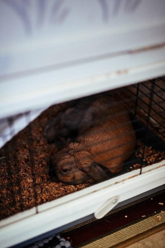 Hur vill kaninen bo och sova