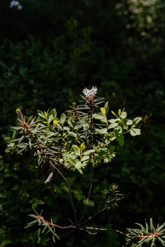 växter i tyresta