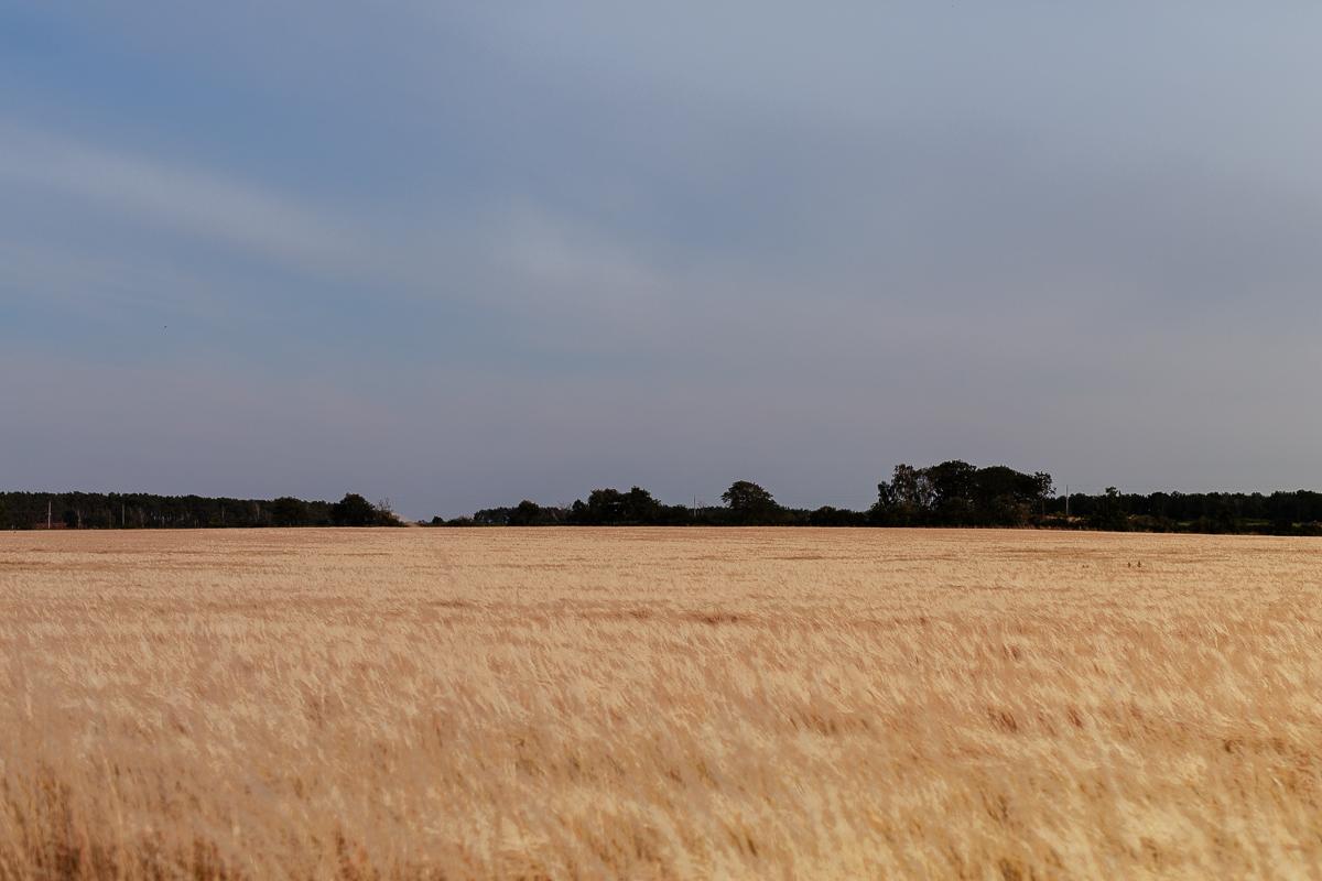 vackert odlingslandskap på öland