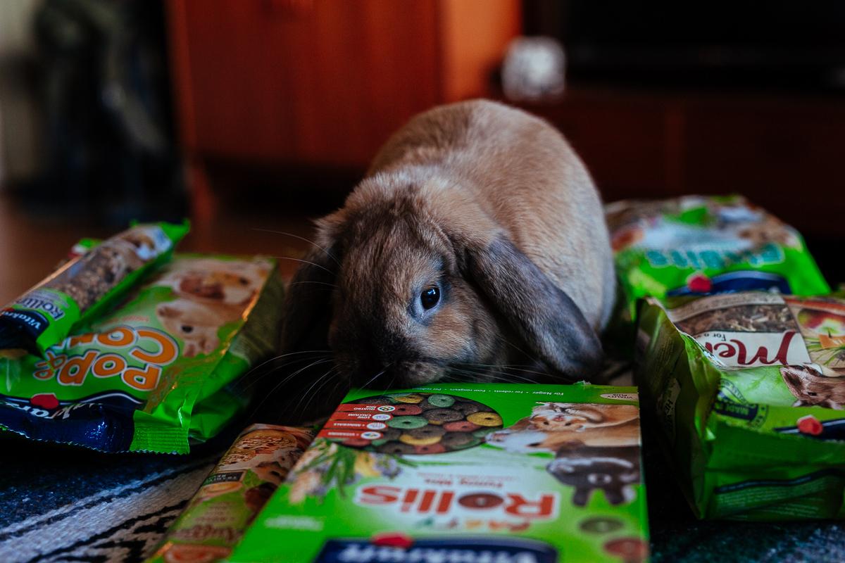 kaninfoder vad äter din kanin