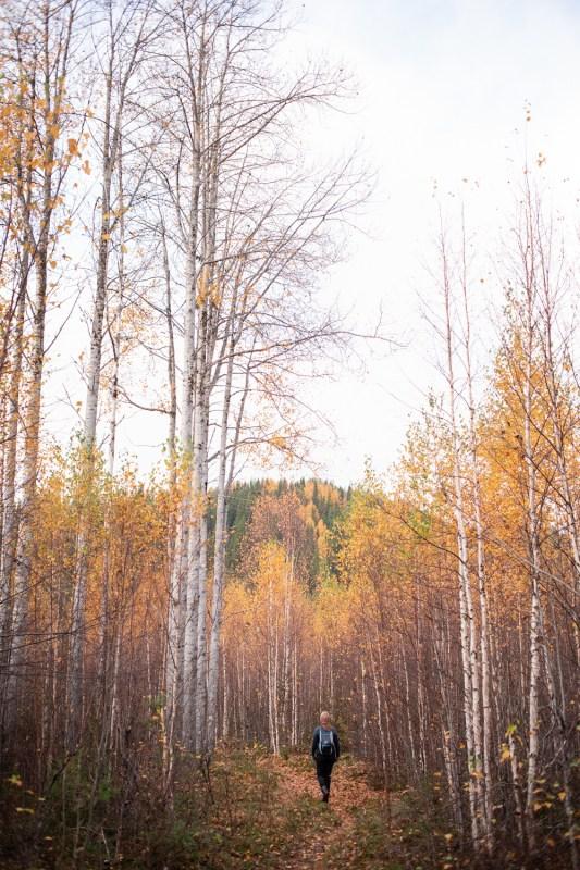 vandra i norrland höst