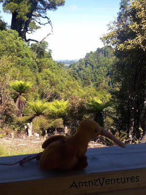Kaha, a Beanie Baby Kiwi sitting on a handrail over looking NZ forest