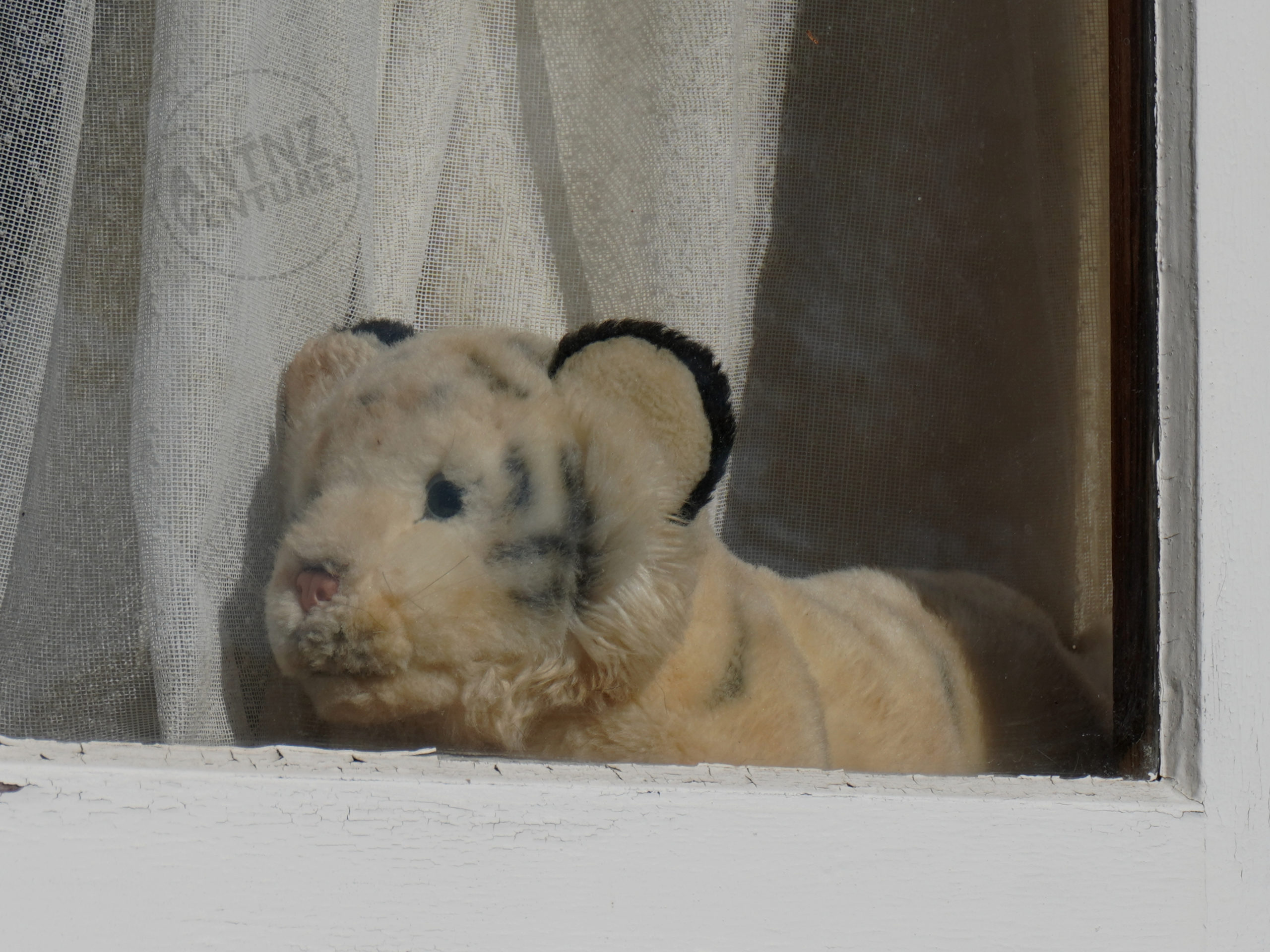 A stuffed white tiger sitting on a windowsill. The tiger is behind glass but in front of net curtain