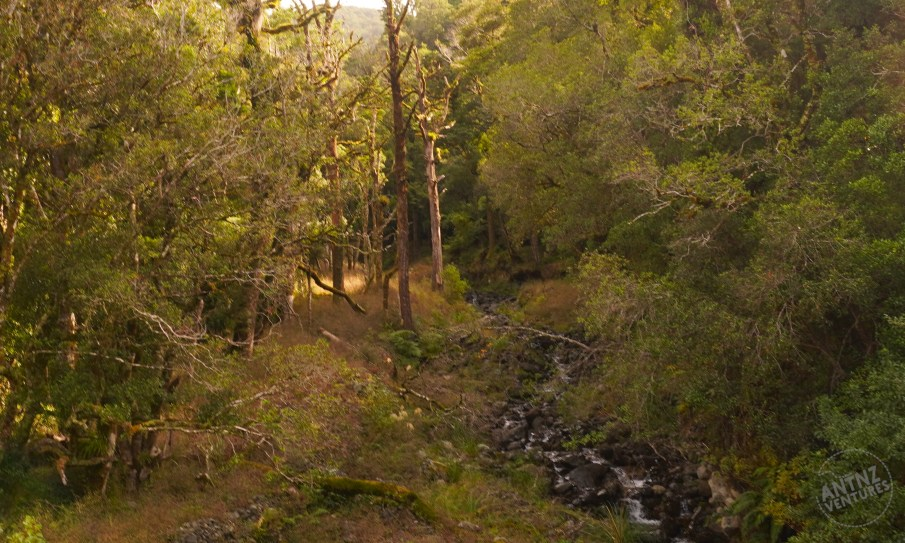 A landscape of NZ Beech and Podocarp forest. Looking into a valley with a river running from the bottom right up to the midline of the photo. To the left of the river are several standing, dead trees.