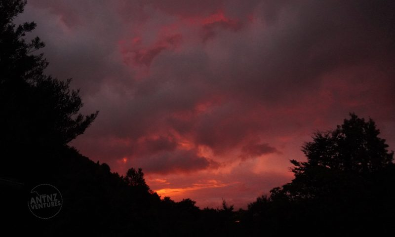 A pink sun rise lights the sky, with the brightest part of the sunrise in the middle of the frame near the bottom. The left and right are framed by silhouetted trees