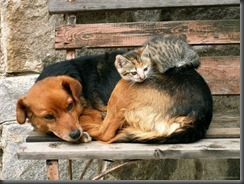 20-cats-sleeping-on-dogs
