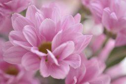 やさしい花びらのふんわり感・・・