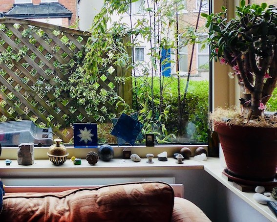 window with sofa and plants