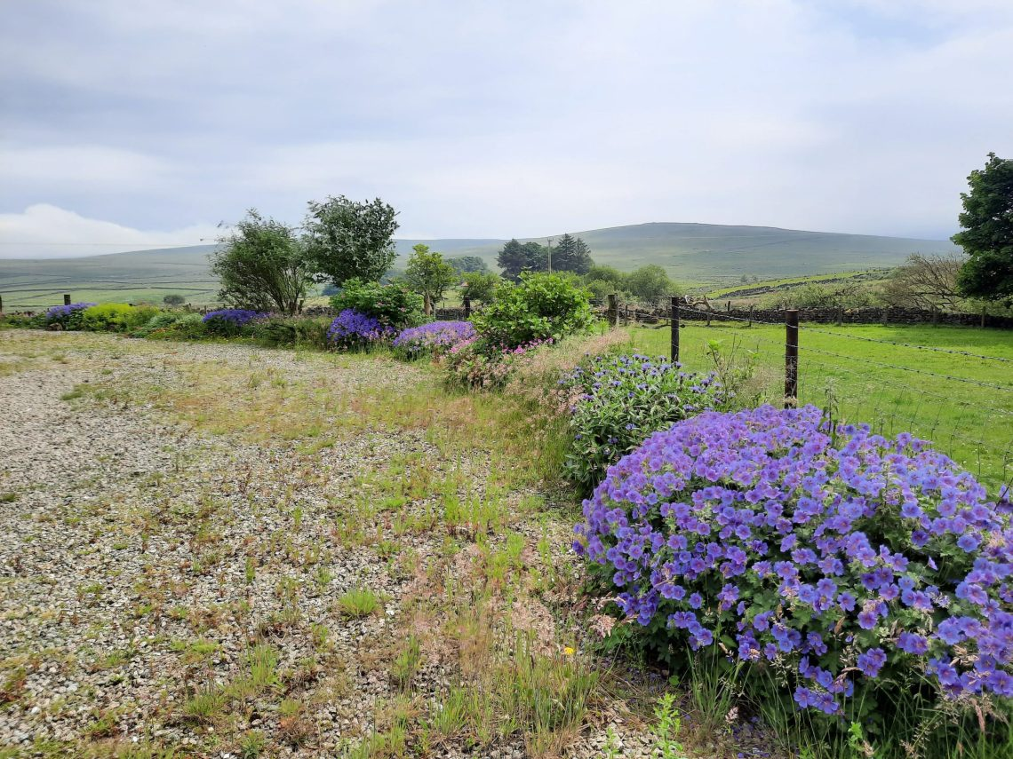 country view with blue flowers