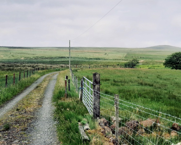 country lane with fence