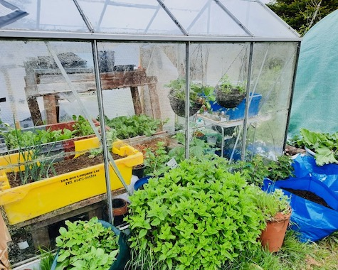 greenhouse with plants and poly tunnel