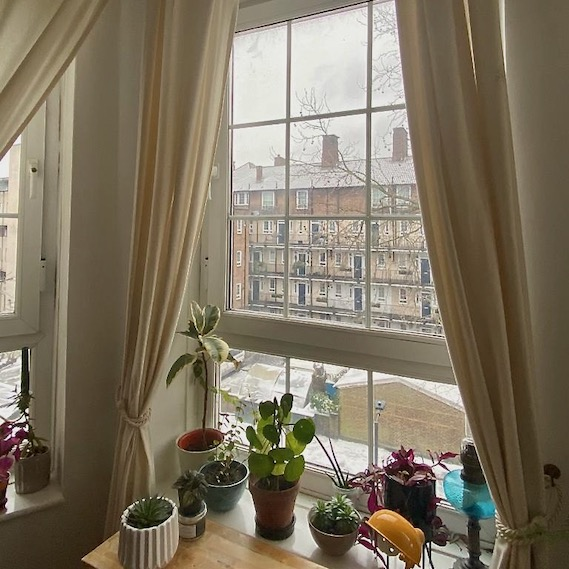view from window with plants