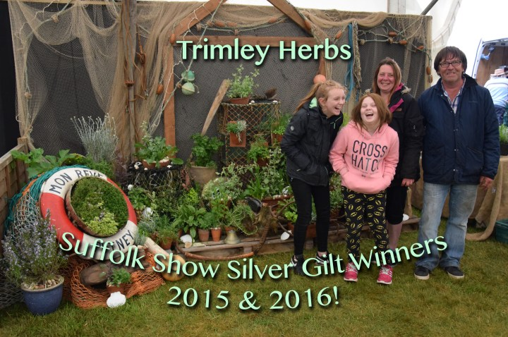Trimley Herbs Suffolk Show Exhibit