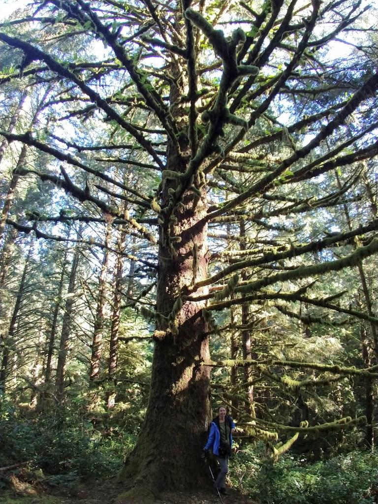 Impressive trees on the China Creek Loop