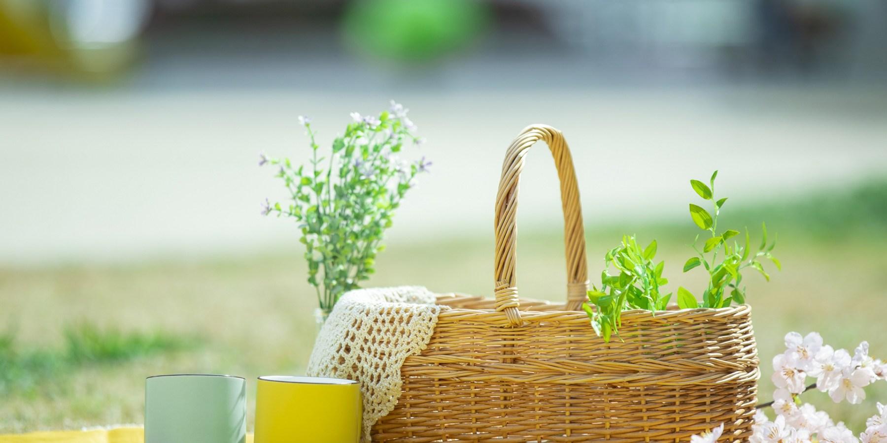 公園でピクニックのイメージ写真