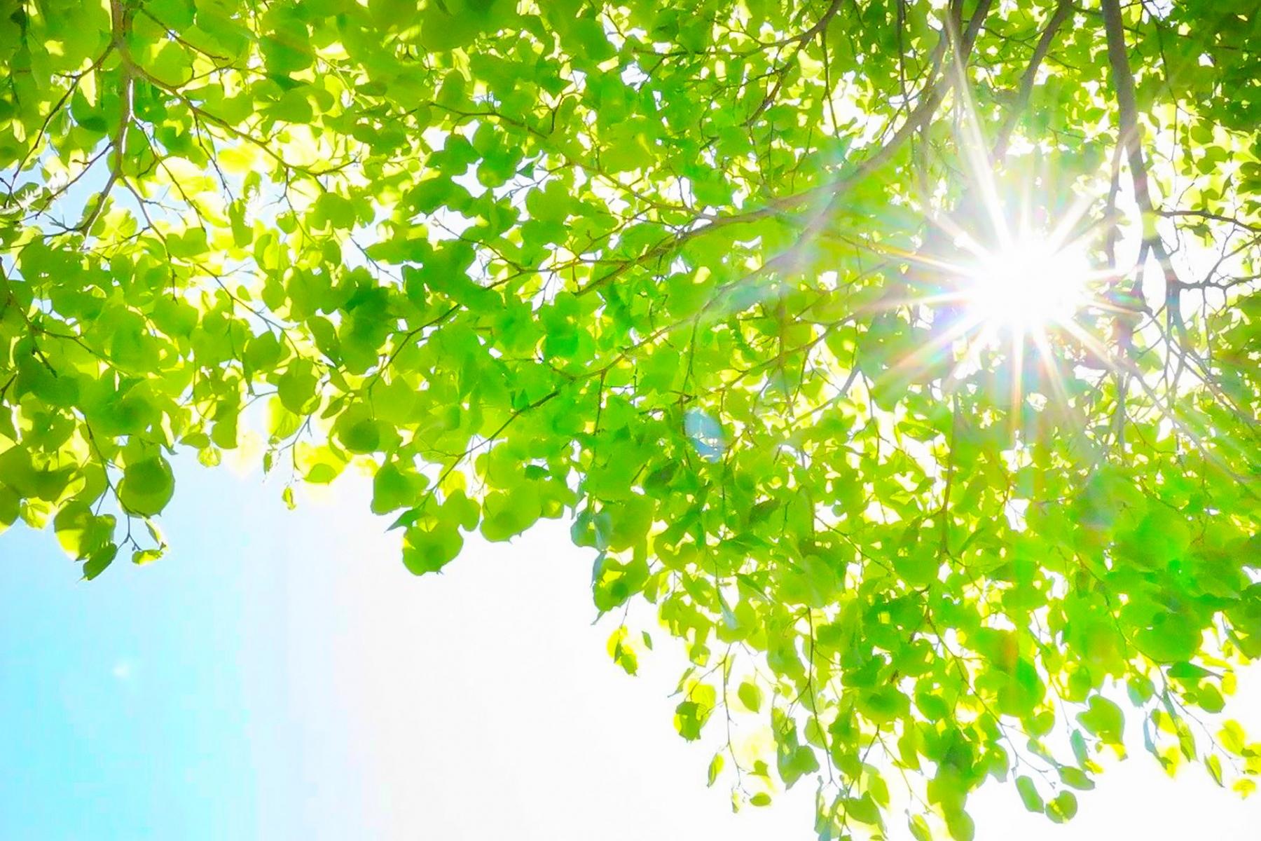 新緑の季節のイメージ写真