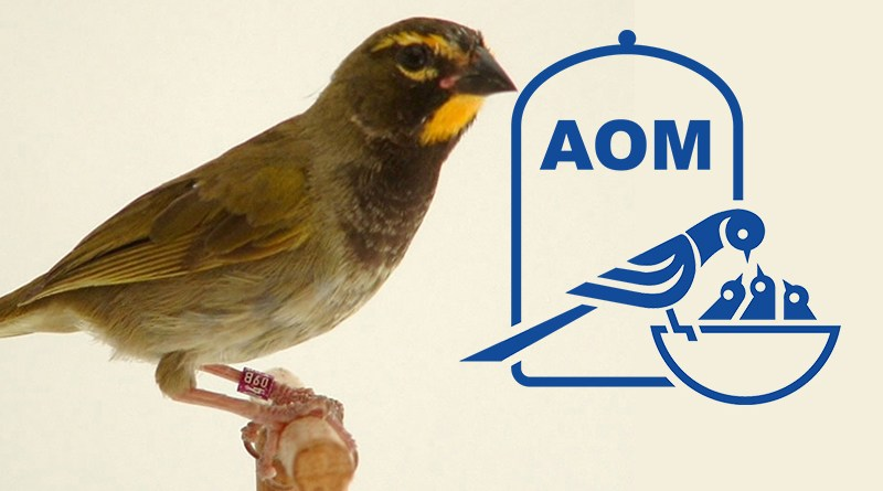 Mostra Ornitologica 2002