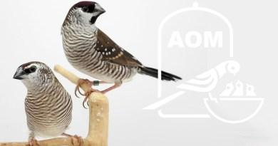Mostra Ornitologica 2005