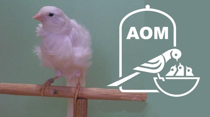 19 Mostra Ornitologica 2014