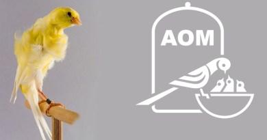 17 Mostra Ornitologica 2012