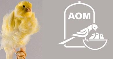 20 Mostra Ornitologica 2015