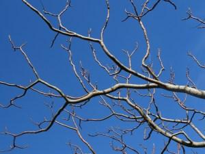 bare-tree-221528_960_720