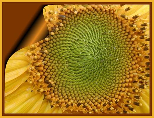 https://i2.wp.com/www.aoum1.persiangig.com/image/phi_18-flower.jpg