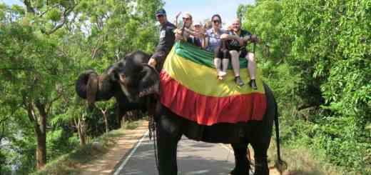 Tour dorso elefante Sri lanka