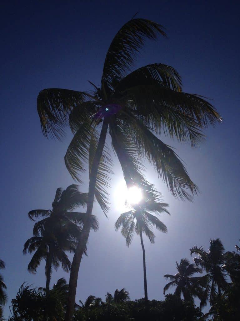 zanzibar, mare, palme, sole