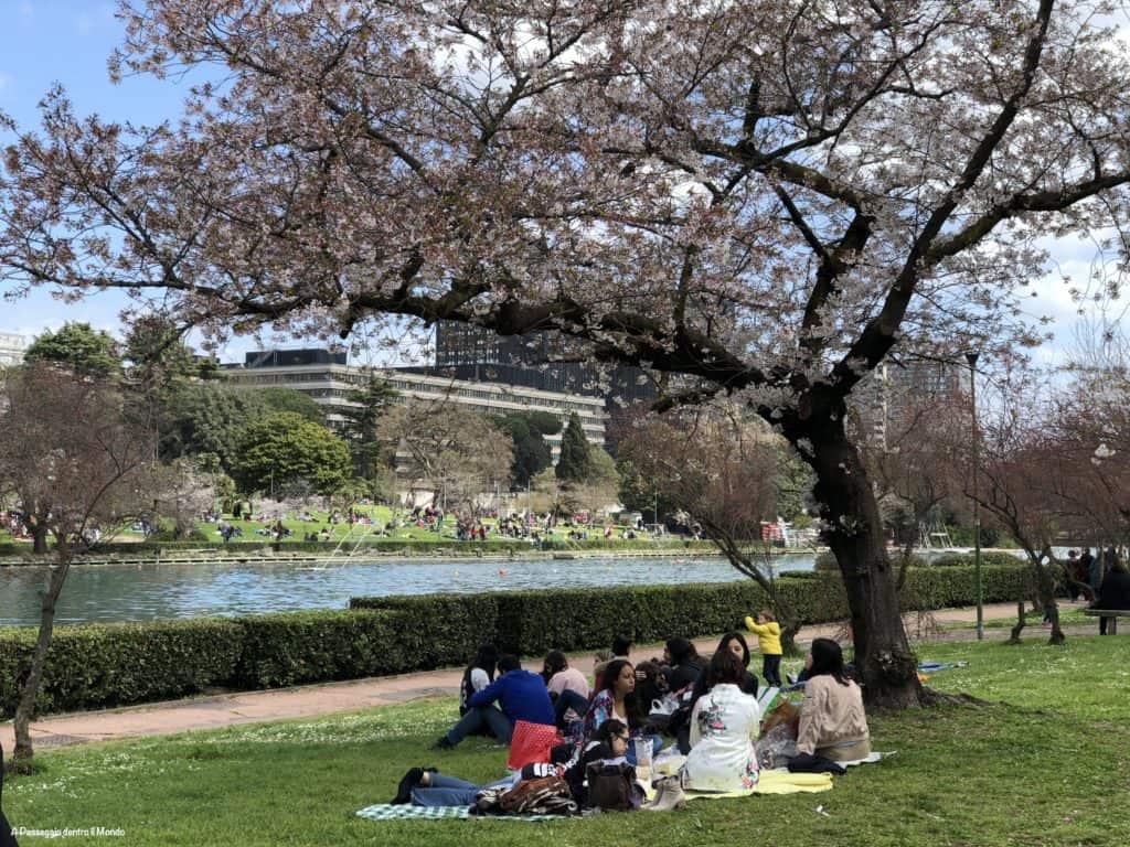Pic-nic sotto gli alberi di ciliegio al laghetto dell'Eur