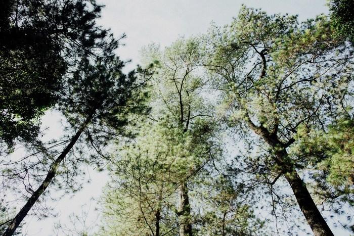 baliweddingphotography-balibasedweddingphotographers-apelphotography-pandeheryana-baturmountprewedding-bestweddingphotographers-45