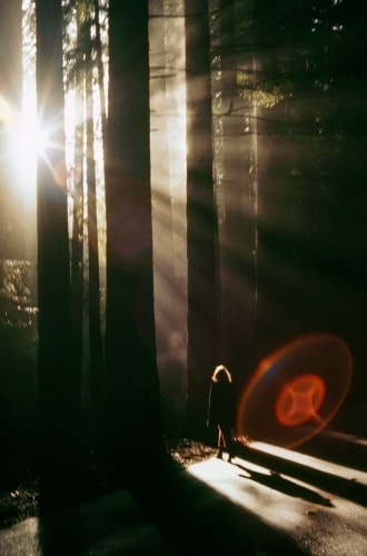The Redwood Alien Roger Steffens
