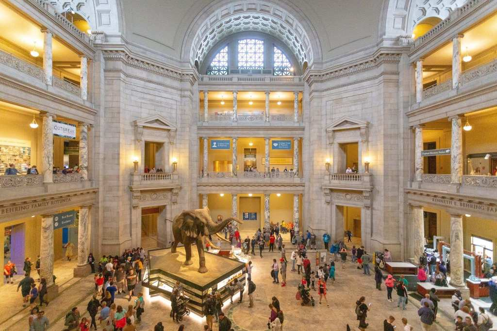Elephant Statue In Washington D.C.'s Natural History Museum Lobby