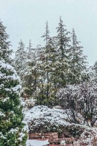 Snowy Garden On a Winter Morning in Arizona